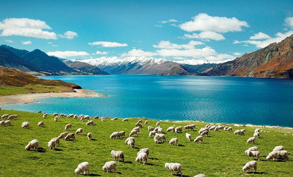 ve-may-bay-di-new-zealand